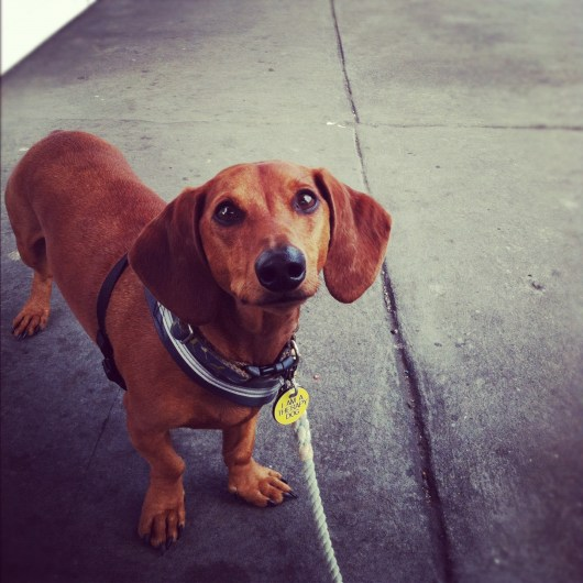 Ammo the Dachshund's Instagram Weekend