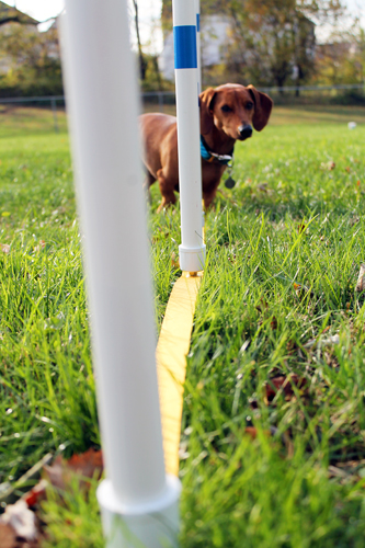 DIY Dog Agility Weave Poles // Ammo the Dachshund