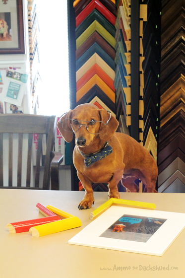 Take Your Dog to Work Day // Custom Framing // Ammo the Dachshund