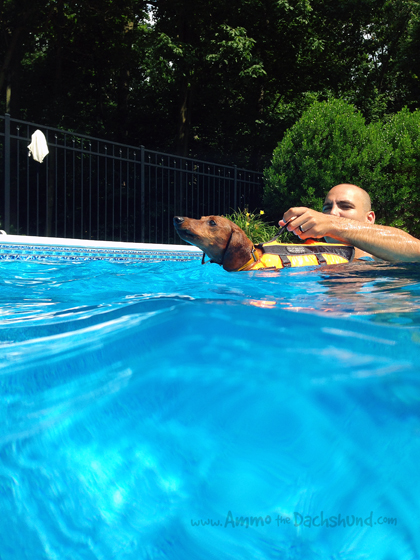 Swim Lessons // Ammo the Dachshund