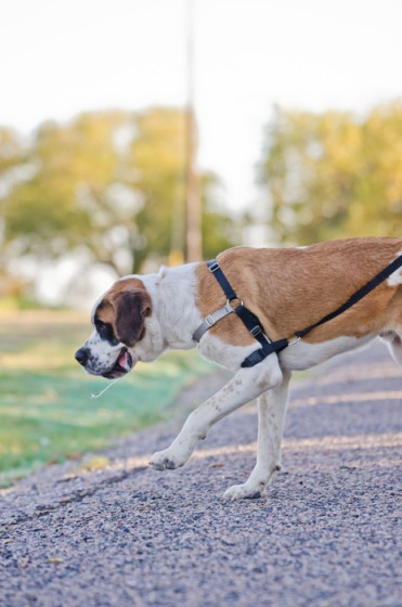 Friday Fetch Petnovate Pull Stop Dog Harness
