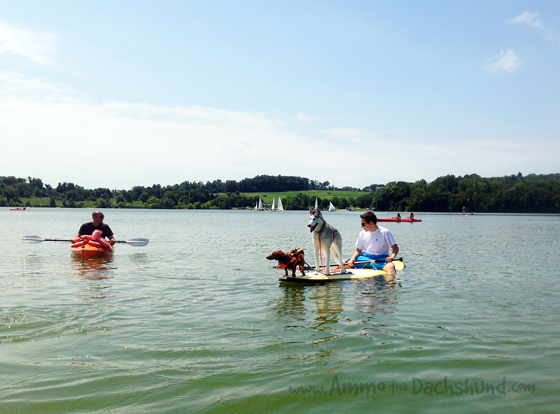 On the Lake with Friends // Ammo the Dachshund