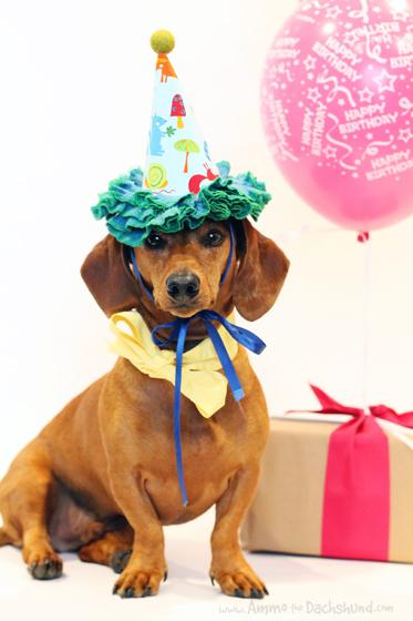 Birthday Dachshund Gifts Cake Ideas And Designs