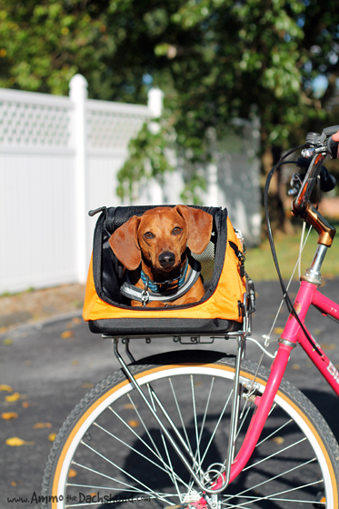 Sleepypod Air and Sidekick Review & Giveaway // Ammo the Dachshund