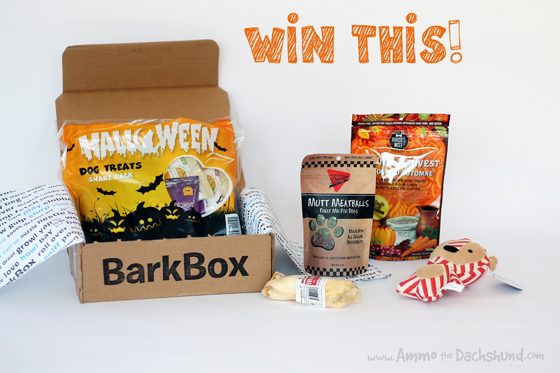 Barkbox Review & Giveaway // Ammo the Dachshund