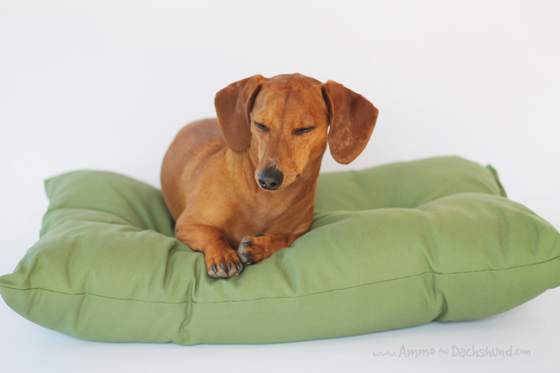 Kentucky Blue Birds Kennel Bed Product Review & Giveaway // Ammo the Dachshund