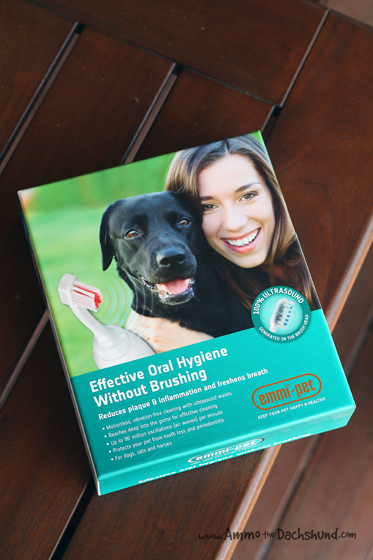 Emmi-Pet Dog Dental Cleaner Review & Giveaway   Ammo the