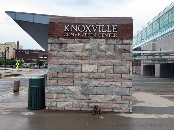 Knoxville Tennessee Convention Center with Ammo the Dachshund