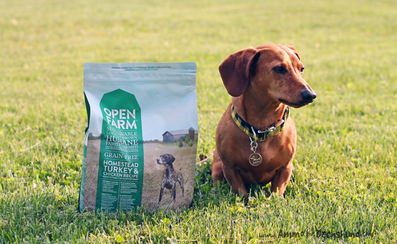 Open Farm Ethically Raised Dog Food Review & Giveaway // Ammo the Dachshund