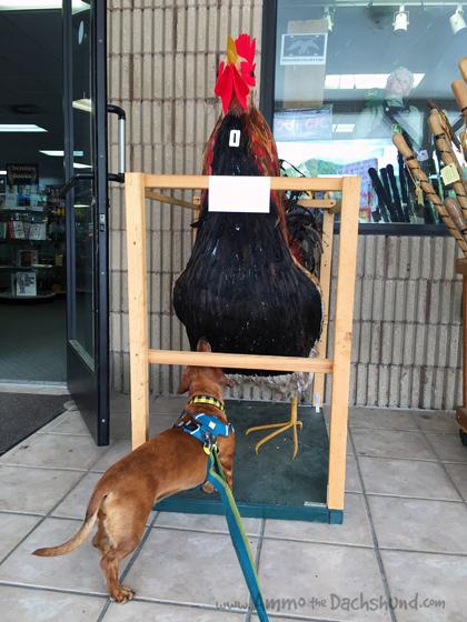 Cherokee N.C. // Pet Friendly // Ammo the Dachshund