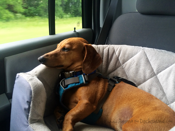 Tennessee Road Trip // Ammo the Dachshund