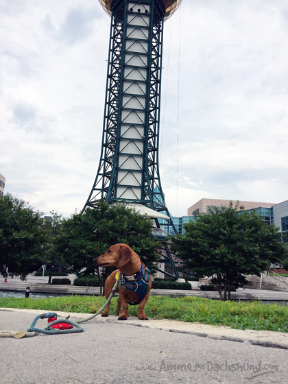 Sunsphere in Knoxville Tennessee with Ammo the Dachshund