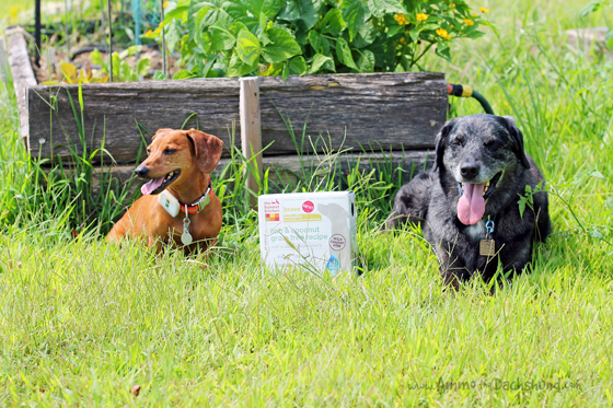 Healthy, Limited Ingredient Diets for Dogs from the Honest Kitchen