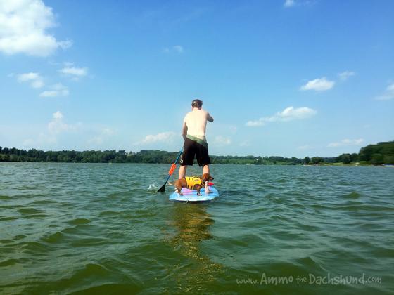 Adventurous Lake Fun with Pets