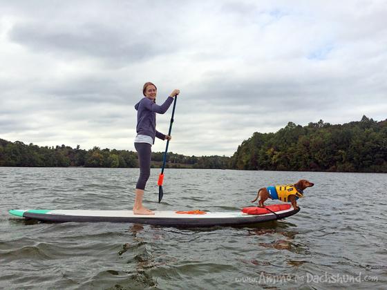 Autumn Adventures on the Lake - Ammo the Dachshund goes Paddleboarding
