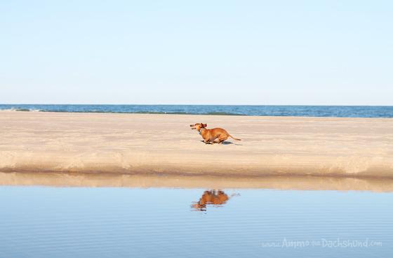 Happy Dog Visits the Beach