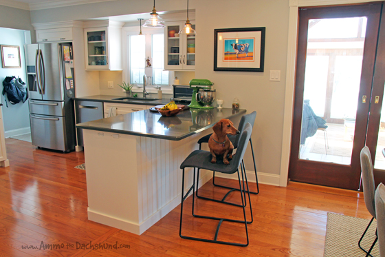 Big Reveal Pet Friendly Kitchen Renovation with Ammo the Dachshund's Help