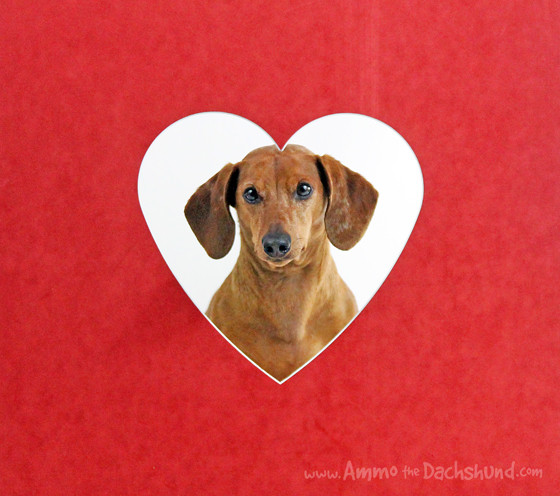valentines day greeting from the cutest dachshund
