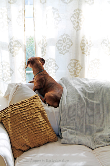Home Security to Let Your Dog Be A Dog + A Giveaway with Kidde