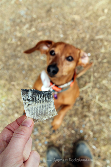 I Wonder Where You Came From // Ammo the Dachshund Reviews The Honest Kitchen Wonders Pet Treats