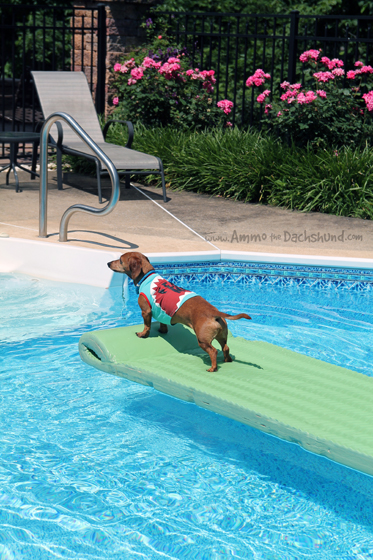 Dog Days at the Pool