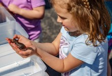 Frankie, a 5-year-old from Harrodsburg, holds a salamander at the Inter-County Energy booth.