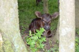 One of the two twins born on May 6th sitting among some trees and plants.