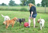 Kristen Wyat rolls around a large ball to entertain some dogs while a retriever sneaks up behind with a ball in his mouth, seeming to want her to throw it again.