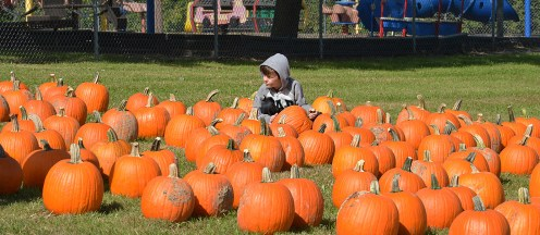 Robin Hart/robin.hart@amnews.com Demetrius Cocanhougher scans over a crop of pumpkins that was delivered to Perryville Elementary School on Monday.