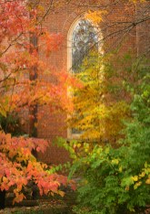 A stained glass window at the Presbyterian Church can now be seen as surrounding trees begin to drop their leaves.
