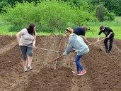 Cylee Barfield, left, and Shalissa Kayanna McGill work in unison to cover seed potatoes with dirt.(Photo by Robin Hart)