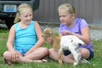 Kendael and Maddy Hammond, of Hustonville, care for a week-old orphaned kid during the goat show Wednesday evening. Lil' Bit was brought to the fair because its owner from Perryville wanted to keep an eye on her because she was weak. (Photo by Robin Hart)