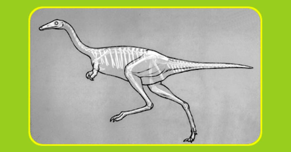 Drawing Dinos Amnh