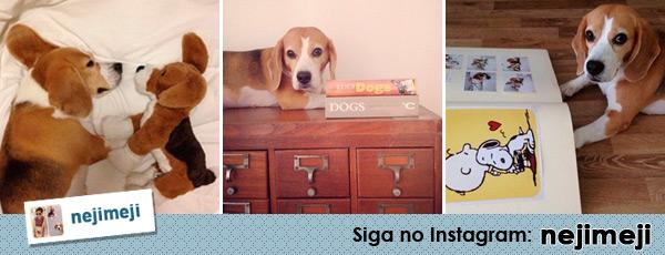 Cachorros no Instagram