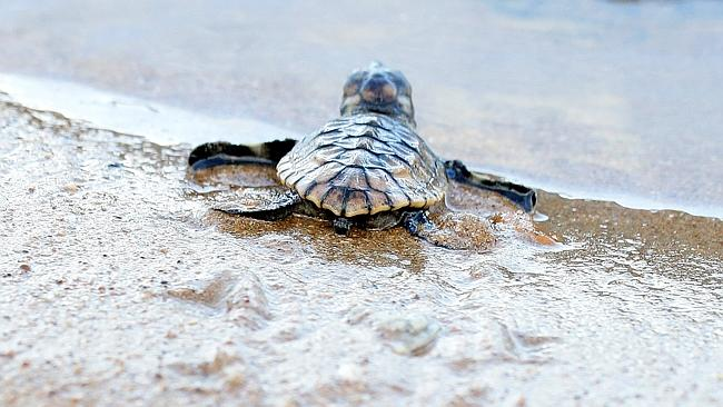 Image result for MON REPOS TURTLE CENTRE