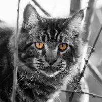 Come ha fatto il gatto selvatico a diventare il micio di casa