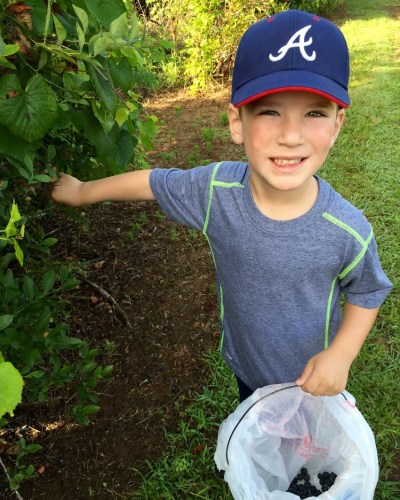 Blueberry Picking in July