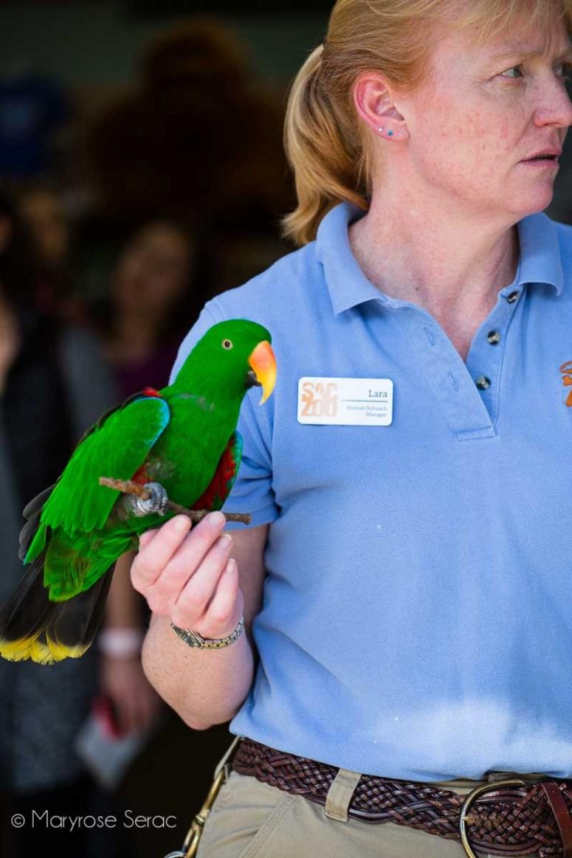 Visit the Sacramento zoo
