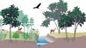 Contoh Soal tentang Ekosistem Lengkap dengan Jawabannya