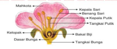 Berbagai Sistem dalam Kehidupan Tumbuhan Dilengkapi Gambar Berbagai Sistem dalam Kehidupan Tumbuhan Dilengkapi Gambar