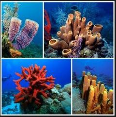 Keanekaragaman Makhluk Hidup Lengkap dengan Gambarnya Keanekaragaman Makhluk Hidup Lengkap dengan Gambarnya