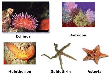 Keanekaragaman Makhluk Hidup Lengkap dengan Gambarnya