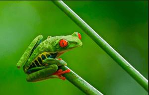 Beberapa Fakta Unik dan Menakjubkan dari Katak Si Hewan Amfibi