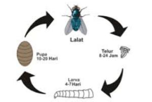 Pertumbuhan dan Perkembangan dalam Sistem Kehidupan Makhluk Hidup