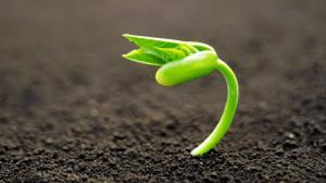 Contoh Soal Pertumbuhan dan Perkembangan Lengkap dengan Kuncinya