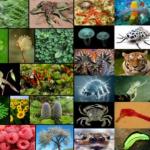 Contoh Soal Keanekaragaman Makhluk Hidup Beserta Kunci Jawabannya