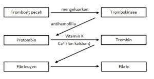 Struktur dan Fungsi Sistem Peredaran Darah pada Manusia