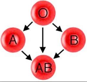 Sistem Penggolongan Darah pada Manusia Lengkap dengan Gambarnya