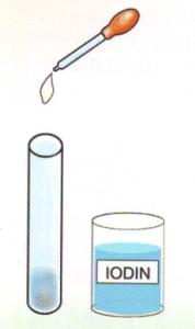 Percobaan Sains Sederhana Uji Zat Tepung (Amilum) Dalam Makanan