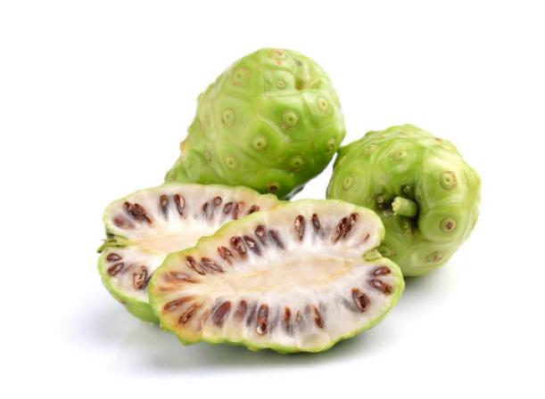 diabetes buah mengkudu obat